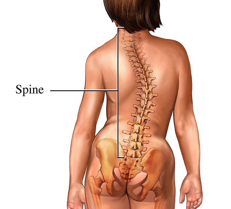 側 彎 症 脊柱